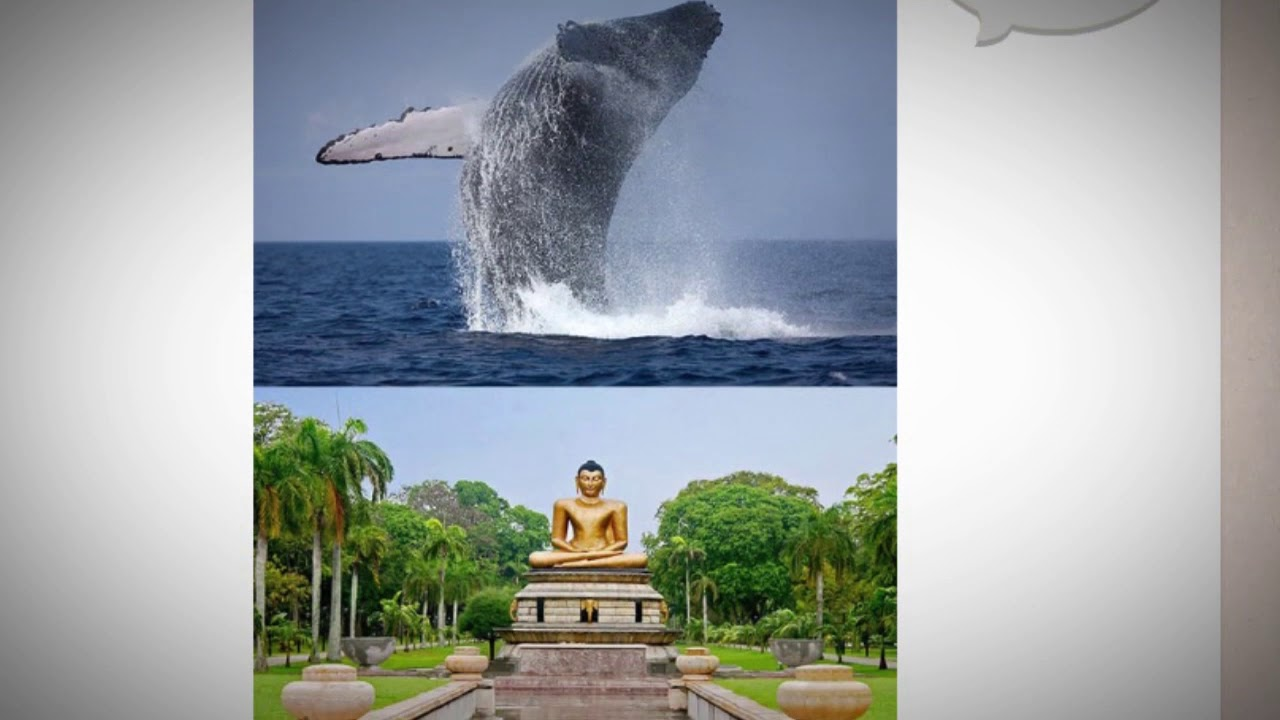 What are some interesting facts about Sri Lanka?