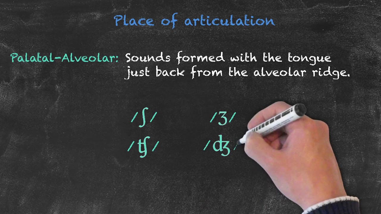 Pronunciation and Phonology in the EFL Classroom – Place of Articulation Pt. 2